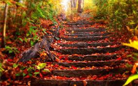 Émerveillement d'automne